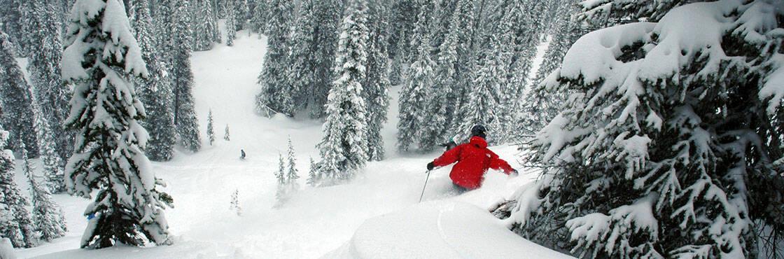 ski freeride dans la forêt